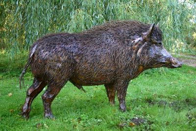 Wild Boar - Ground Mammals