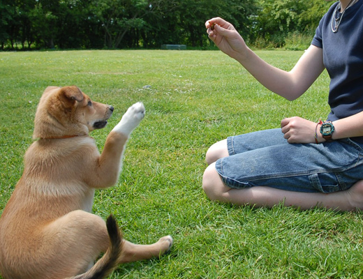 dog training secrets Dog Training Secrets