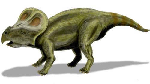 Protoceratops1 Protoceratops