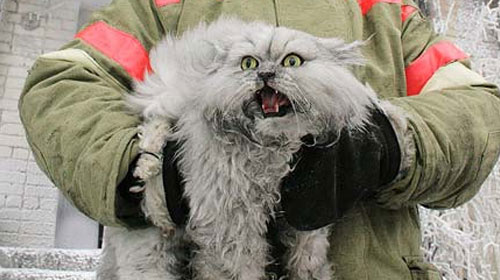 firecat 9 Animals That Saved Human Lives
