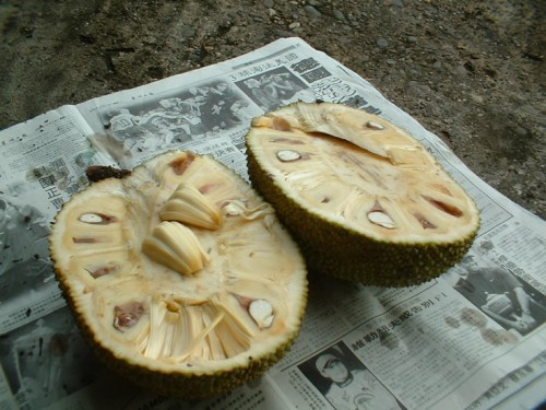 Jack Fruit Opened e1282492547385 Jackfruit