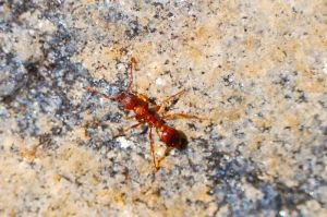 1175947 ant on the rock Ant