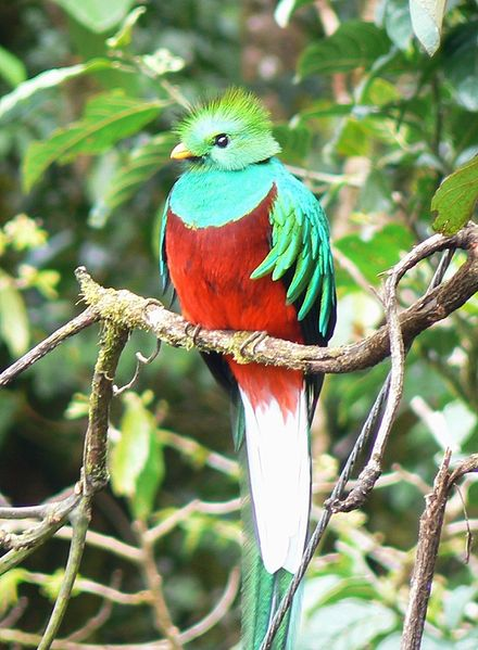 quetzal National Birds of the World