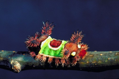 10 Beautiful Yet Toxic Caterpillars