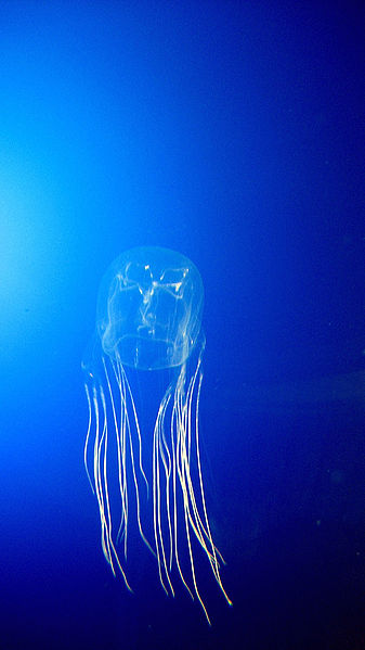 10 of the Most Beautiful Jellyfish in the World - What on ... - photo#19
