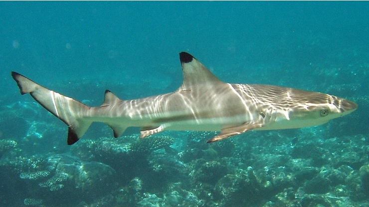 10 of the World's Scariest Sharks - What on Earth?