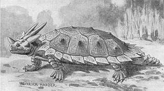 Meiolania 10 Animals Who Were Forced Into Extinction