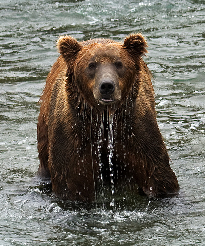 bear Amazing Wildlife Expeditions That You Shouldnt Miss