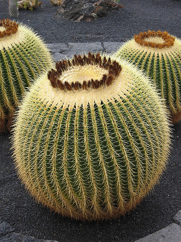 cactus Walking Cactus Fossils Found in Southwestern China