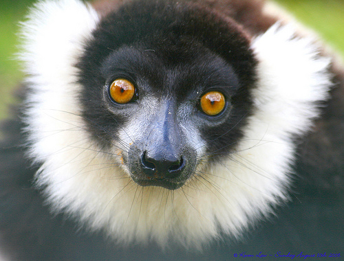 madagascar animal Amazing Wildlife Expeditions That You Shouldnt Miss