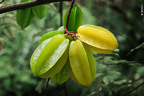 starfruit 10 of the Most Exotic Tropical Fruits on Earth