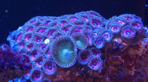 coral 10 Animals You Never Knew Were Poisonous