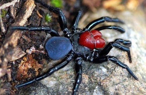 mouse spider 20 Species You Dont Want To Meet