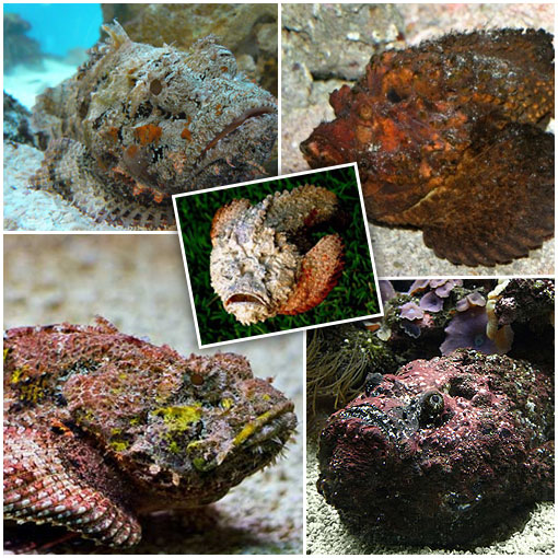 stonefish 4 Silent Killers of the Natural World