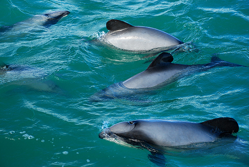 These dolphins are incredibly rare