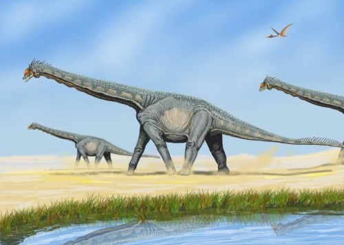 Alamosaurus sanjuanensis e1300253330271 Did Dinosaurs Become Extinct 65.5 Million Years Ago?
