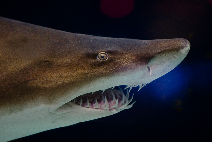 10 Of The Worlds Scariest Sharks additionally Golden Globes Reveal Hot Trend Of The Side Boob moreover T65 Topic additionally Its Not The Job Itself That Drives Me Insane Its The Stupid Idiots I Work With And The Immature Crap I Have To Put Up With Daily Ba6ba likewise Watch. on oscar does not close mouth