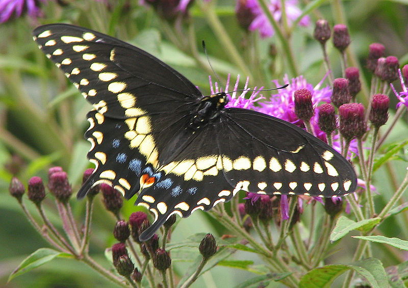 10 of the World's Most Beautiful Butterflies - What on Earth? 10 Most Beautiful Butterflies