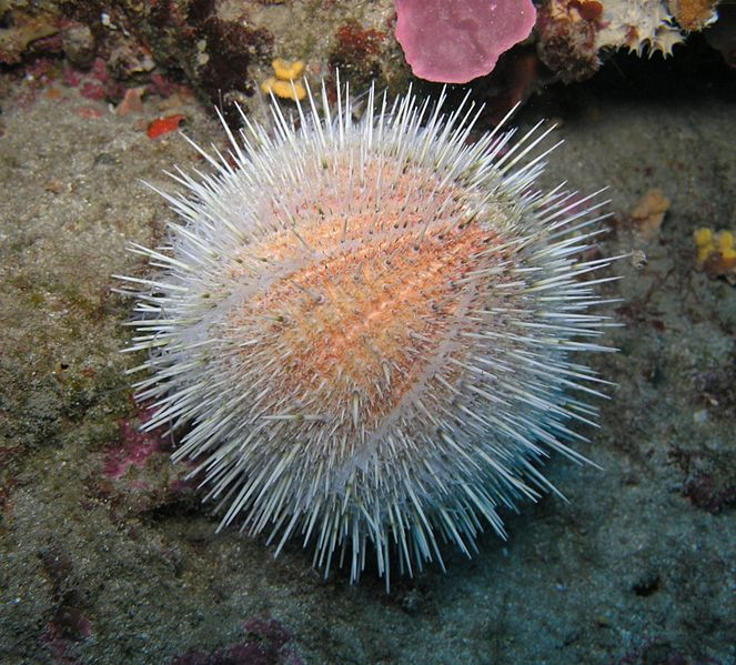 Formation of sea urchin barrens