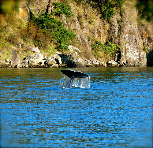 whale Amazing Wildlife Expeditions That You Shouldnt Miss